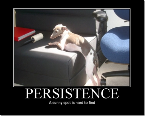 Persistence - A sunny spot is hard to find