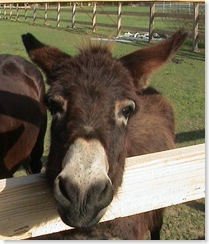 A Donkey Named Lester - Creative Commons By Attribution - ninjapoodles